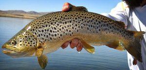 Read more about the article فوت و فن تکثیر و پرورش ماهی قزل آلا