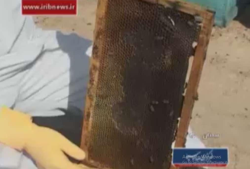 برداشت عسل از کندوهای زنبور عسل