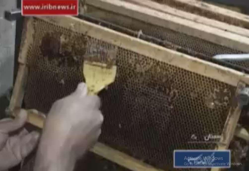 برداشتن پولک ها از روی سطح قاب های کندوهای تولید عسل