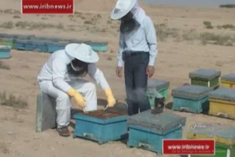 بزرگترین مرکز پرورش ملکه زنبور عسل در ایران