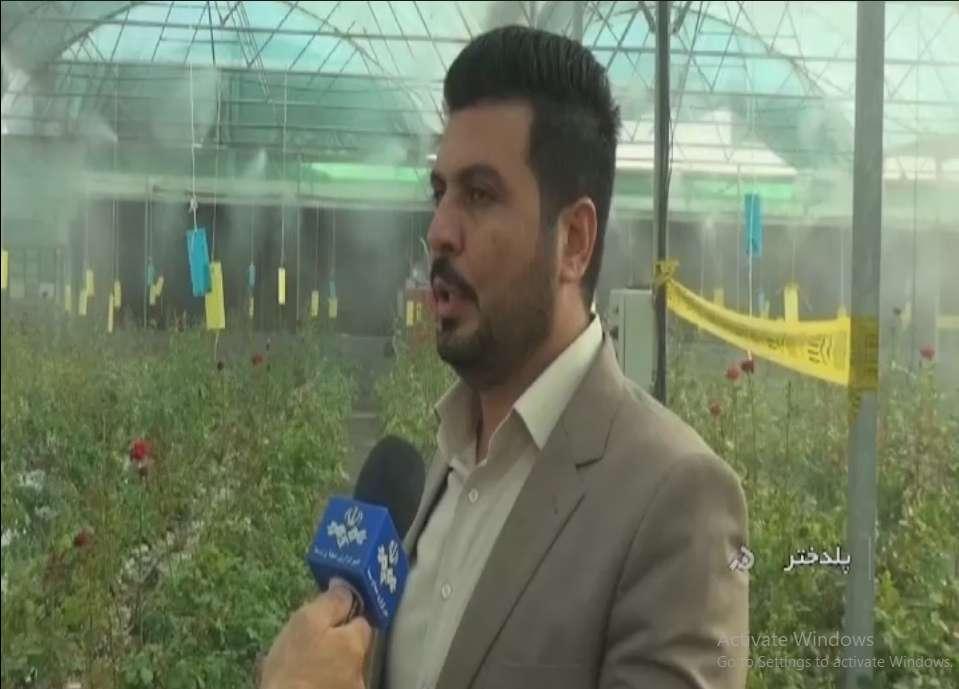 کارآفرین با راه اندازی گل خانه کشت هیدروپونیک گل رز