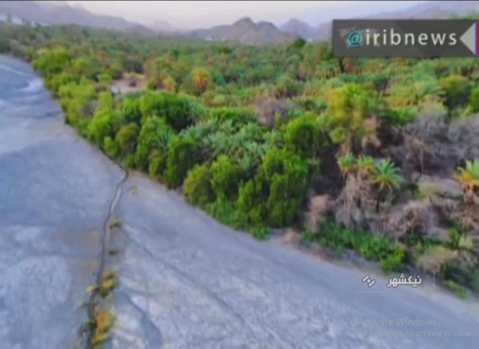 کشت گیاه جمبو در خط ساحلی و حاشیه رودخانه ها