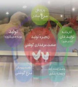 Read more about the article آشنایی با زنجیره تولید گوشت مرغ