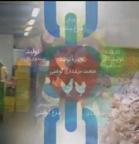 عضوریت در زنجیره تولید گوشت مرغ سودآوری تولید کننده را بیشتر می کند