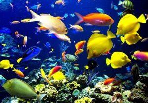 Read more about the article پرورش ماهی زینتی شغل خانگی با سرمایه اندک