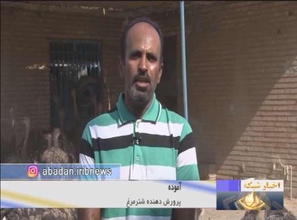 آموده پرورش دهنده شتر مرغ در خرمشهر