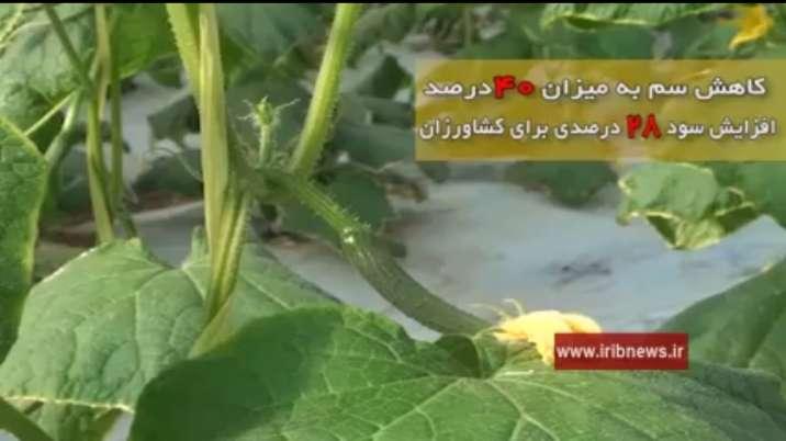 کاهش مصرف سموم کشاورزی با روش مبارزه بیولوژیک
