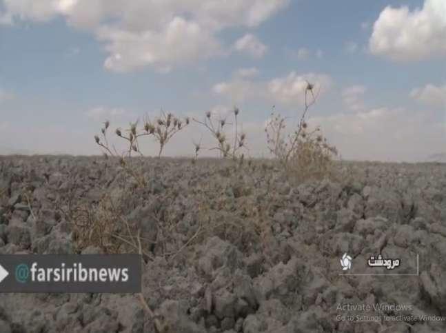 کشت گیاه کینوا در مناطق شور و کم آب