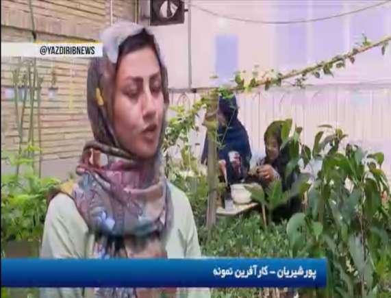 کارآفرینی بانوی یزدی با تولید گل های زینتی در خانه