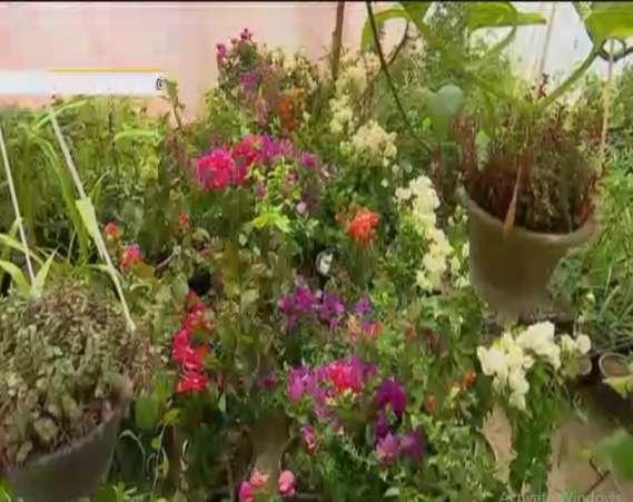 تکثیر و پرورش گل های زینتی در خانه