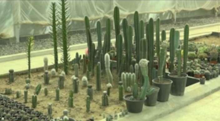 پرورش انواع کاکتوس در همدان