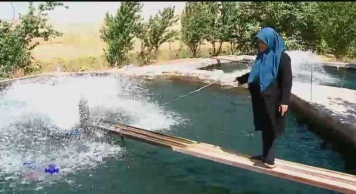 کارآفرینی بانوی 70 ساله در حوزه آبزی پروری