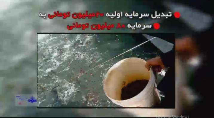 ایده پرورش ماهی