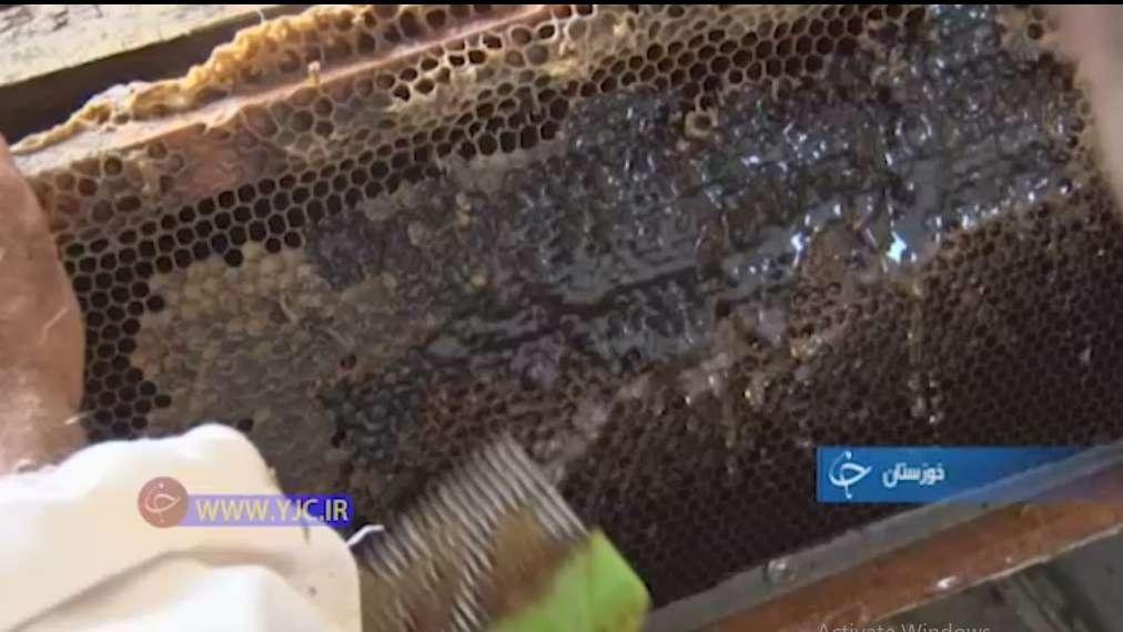 پولک زنی اولین گام در استخراج عسل