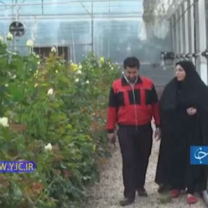 کارآفرینی زوج شوشتری با راه اندازی گلخانه گل رز