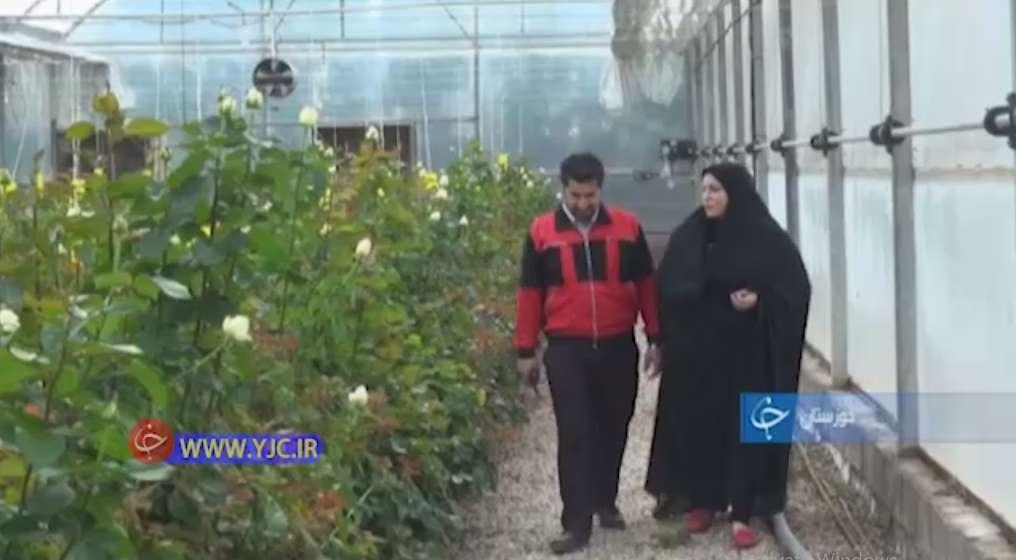 کارآفرینی زوج شوشتری با را هاندازی گلخانه کشت گل رز