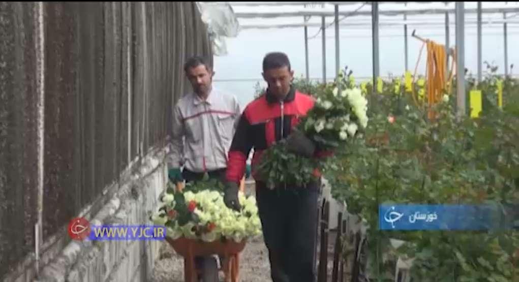 ارسال گل رز به تهران و سراسر ایران