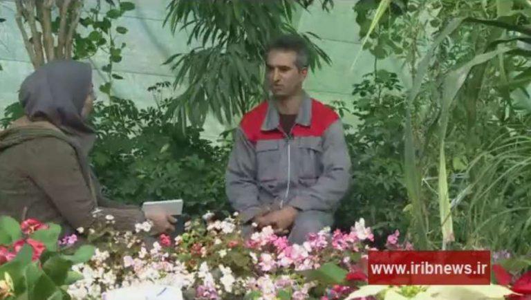 ایده تولید گل های تزئینی و دارویی