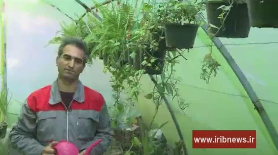 کارآفرینی آقای نقشینی با تکثیر و پرورش گل های تزئینی و دارویی