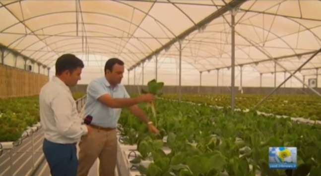 آقای مسلمان، کارآفرین در حوزه کشت گلخانه ای به روش نوین