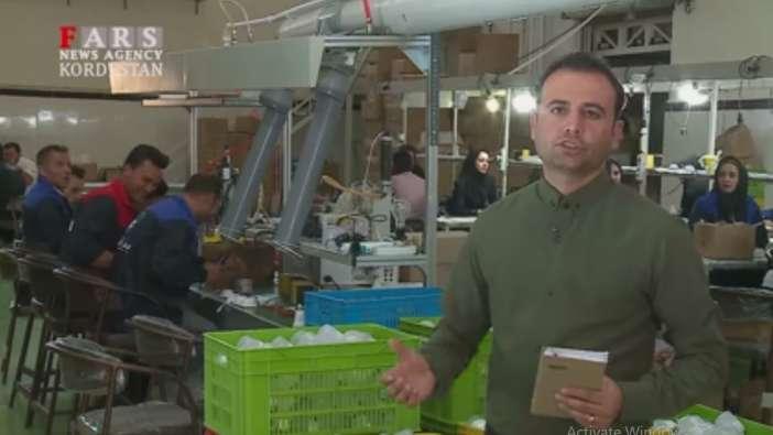 کارآفرینی با تولید لامپ های کم مصرف