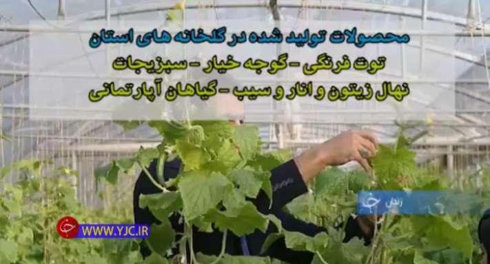 تولیدات گلخانه های استان زنجان