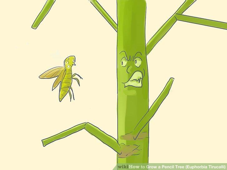 در مورد آفات گیاهی برای گیاه مدادی (یوفوربیا تیروکالی) نگران نباشید