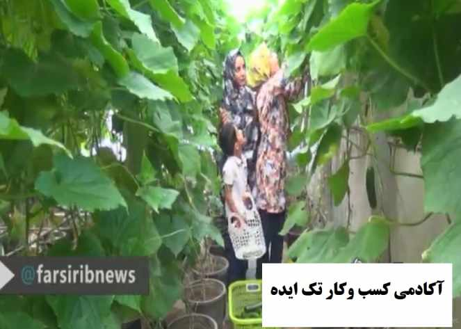 گلخانه پشت بامی پرورش خیار سبز در اقلید