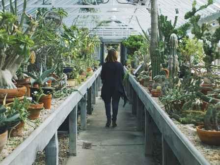 ایده راه اندازی گلخانه پشت بامی