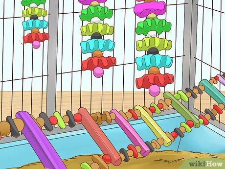 اسباب بازی های مناسب برای پرورش مرغ عشق