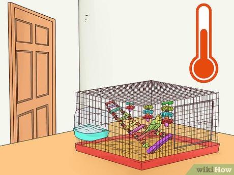 قفس مرغ عشق را در مکان و شرایط مناسب قرار دهید