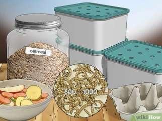 مواد و امکانات لازم برای پرورش میلورم ها