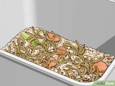 ریختن لاروها به داخل یکی از ظروف پرورش میلورم
