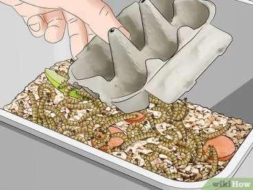 قرار دادن شانه تخم مرغ در ظرف پرورش میلورم ها