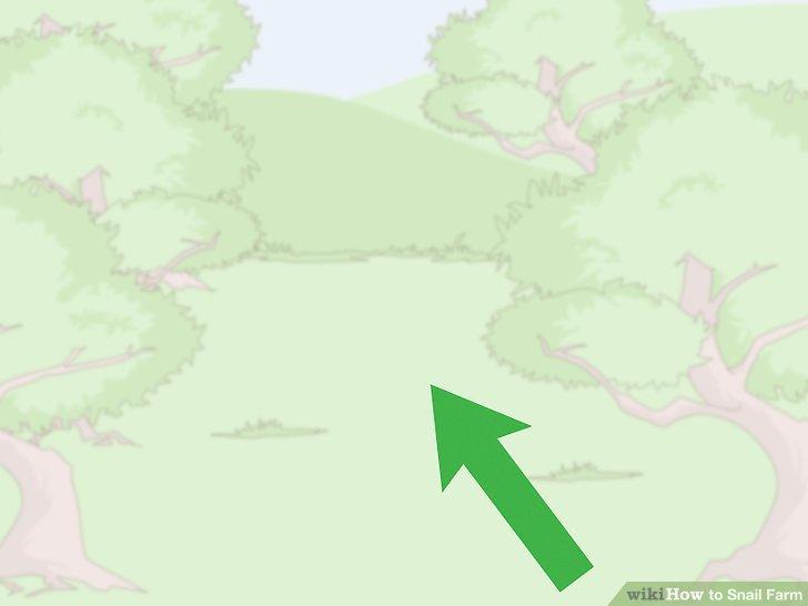 حلزون ها را در محیط بدور از وزش باد نگهداری کنید