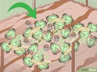 حلزون ها را به محل سکونتشان منتقل کنید
