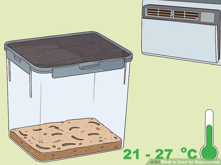 دمای مناسب برای پرورش سوپر میلورم