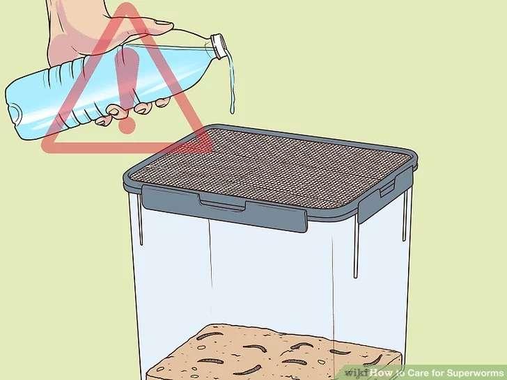 تامین آب سوپر میلورم ها