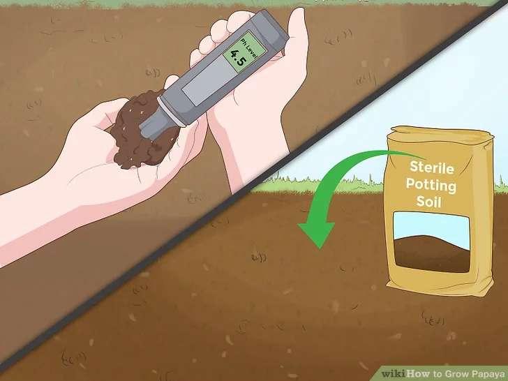 آماده سازی خاک برای کشت گیاه پاپایا