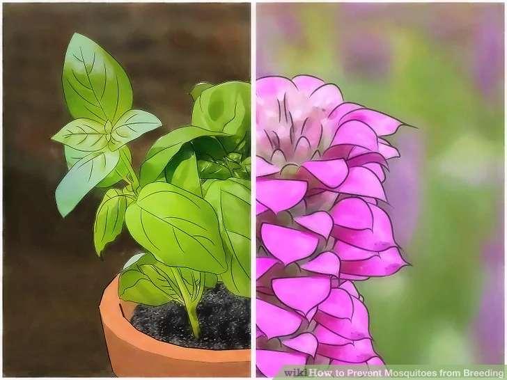 گیاهان دور کننده پشه ها