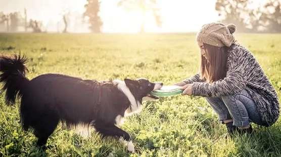 کسب و کار پرستار حیوانات خانگی (PET-SITTING BUSINESS)