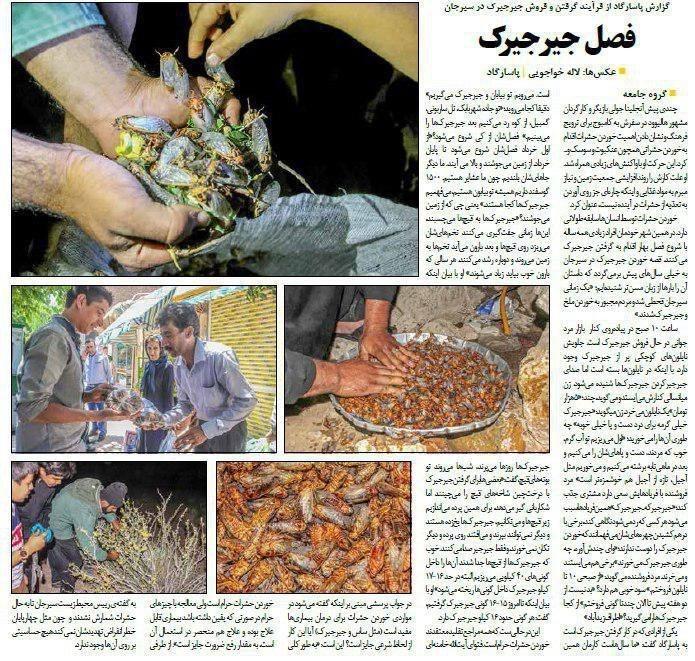 خرید و فروش جیرجیرک در ایران