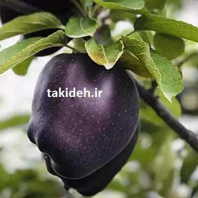 ایده تولید سیب سیاه
