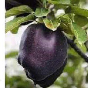 ایده تولید سیب رنگی: سیب سیاه، سیب آبی، سیب سفید