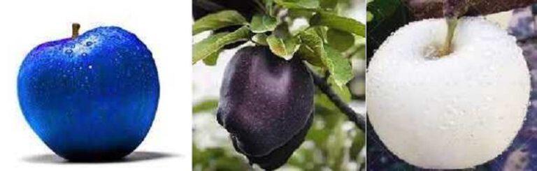 Read more about the article ایده تولید سیب رنگی: سیب سیاه، سیب آبی، سیب سفید