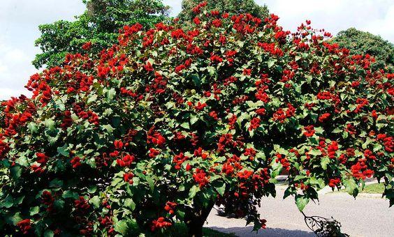 درخت رژ لب