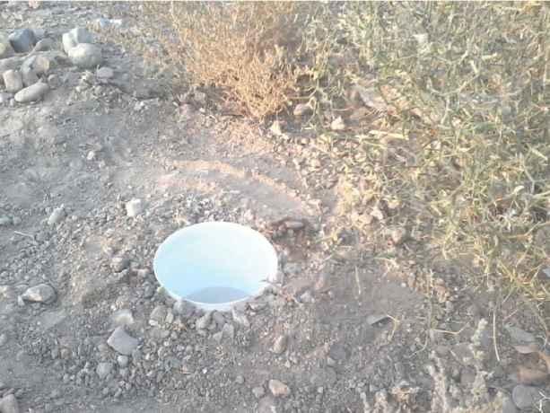 صید عقرب ها به روش تله آب